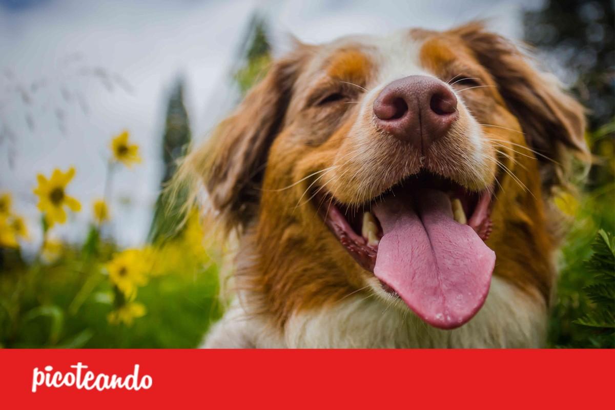 Desmienten mito de que un año humano equivale a siete de perro